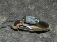 The Cyborg Roach